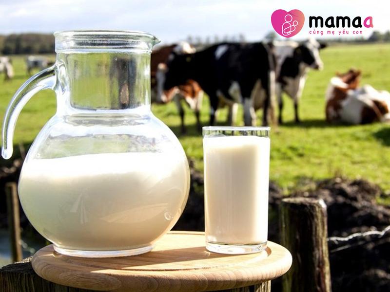 Sữa non bò